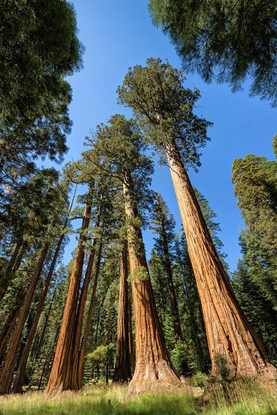 Sequoia National Park - September 2012