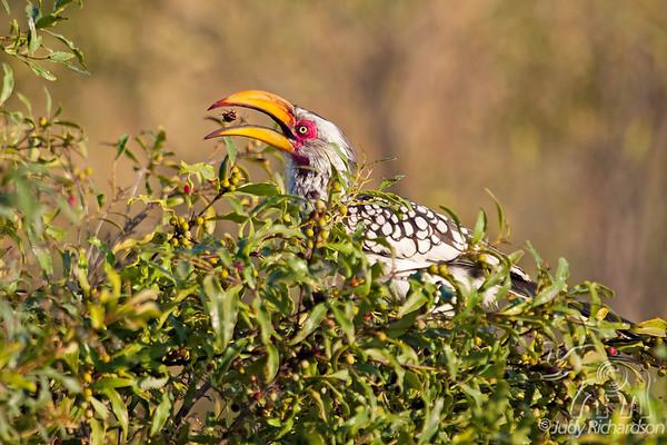 Africa Birds - 2014