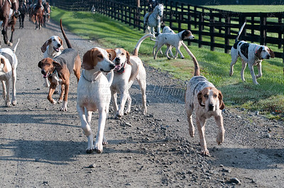 Snickersville Hounds 10-23-2011