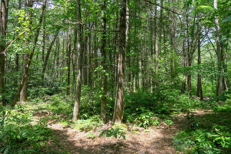 Riverside Trail -- 2,350'