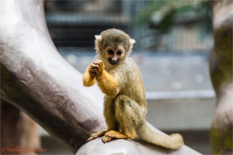 2017-11-16 Zoo Basel - IMG_3477.jpg