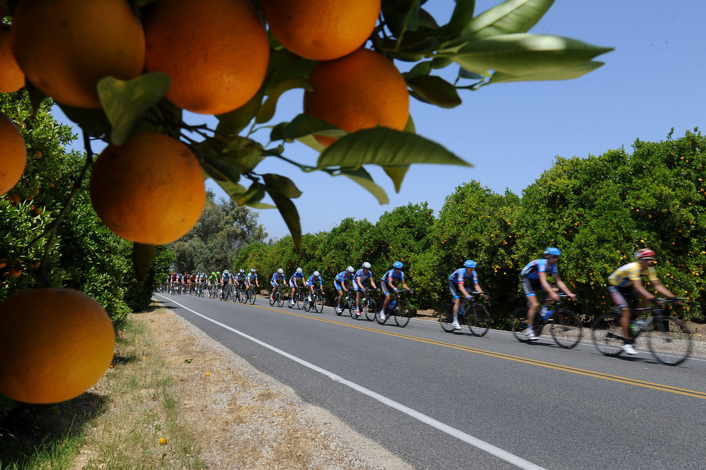 . Riders make their way through orange groves on Sespe Street near Fillmore during Stage 4 of the Amgen Tour of California which started in Santa Clarita and ended in Santa Barbara, Wednesday, May 15, 2013. (Michael Owen Baker/Staff Photographer)