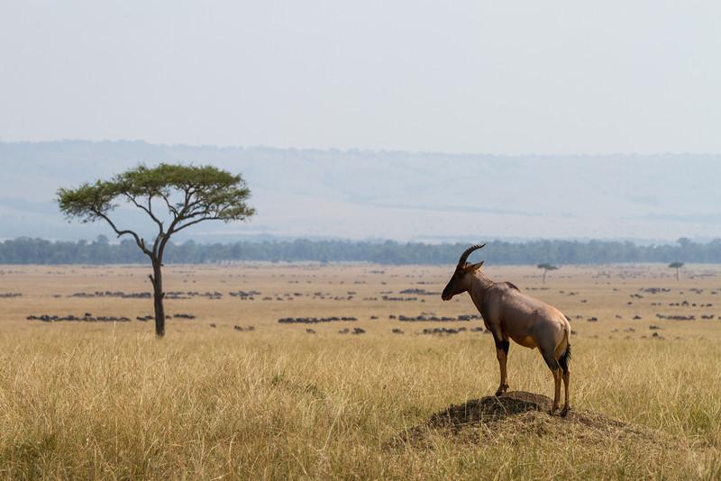 2013-Kenya2013-0720-9605.jpg