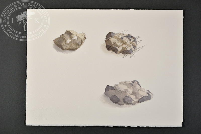"Fossils from Barentsburg, Svalbard | 7.9.2017 |  ""I want to convey what I see with immediacy and simplicity to make the viewer feel present on the Arctic scene."" 