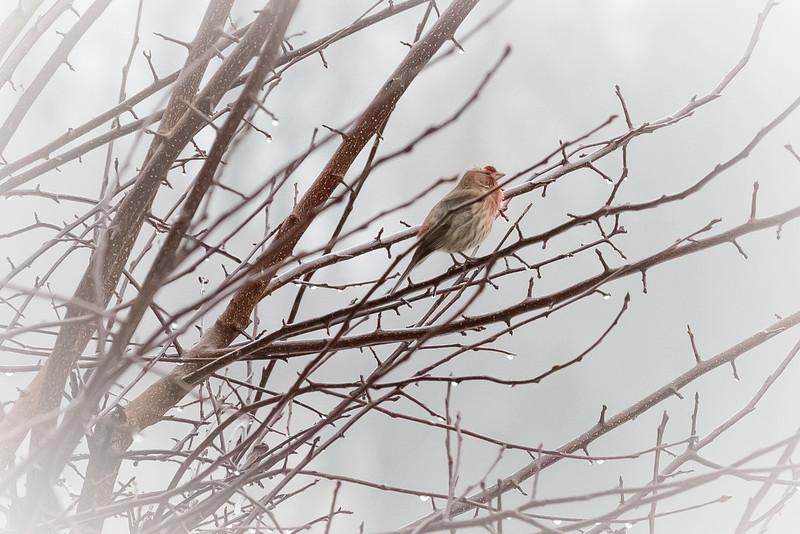 Bird 1-8022.jpg