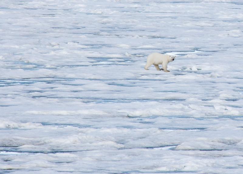 Svalbard - High Res-29.jpg