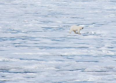 Arctic Creatures