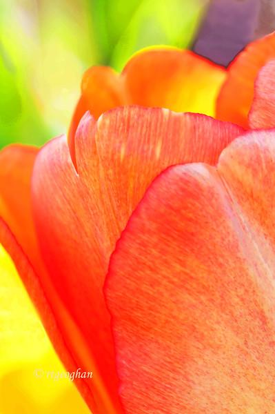 April 7_TulipGardenImpressions_0307.jpg