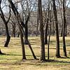 Tree Stand II