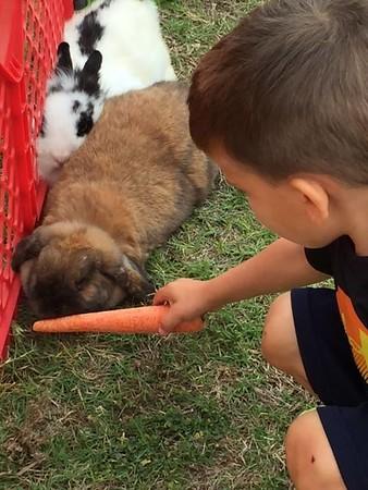Lil' Cats Petting Farm 2017