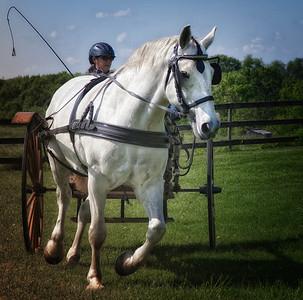 Horses - Cart Driving