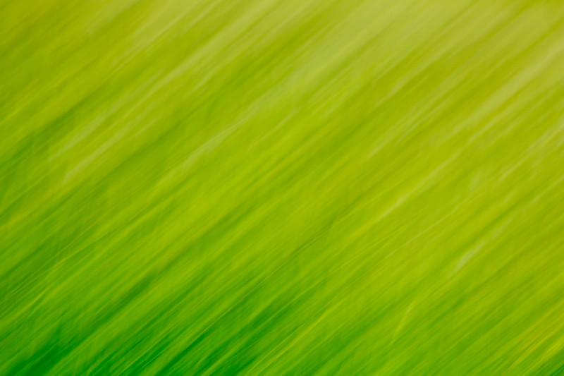 Grass impressions 4