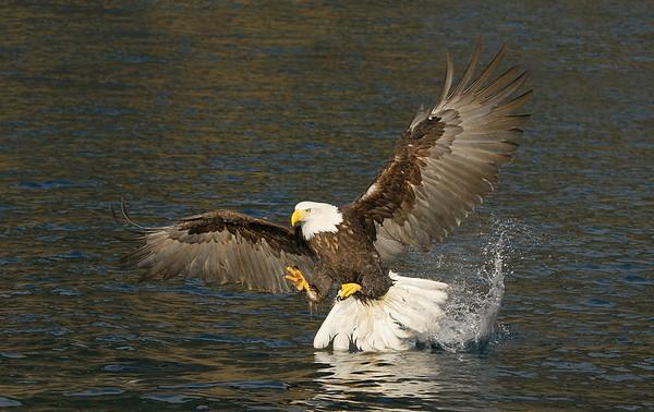 2009 Homer, Alaska Eagles