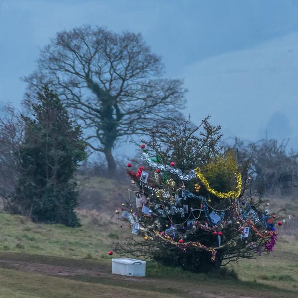 Dog's Christmas Tree-7561.jpg