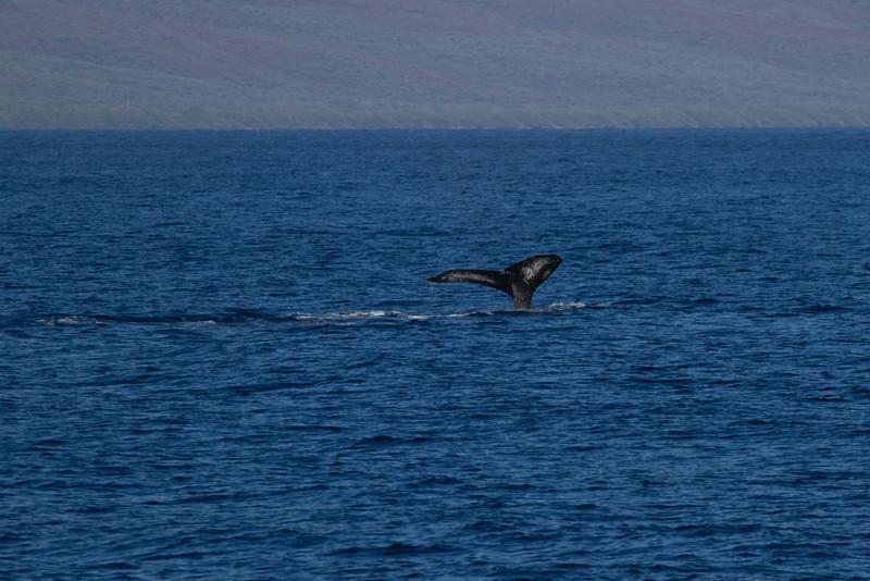 Hawaii2012-996.jpg