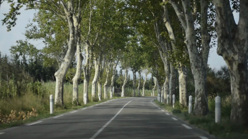 This video may make you dizzy but I am a sucker for a road lined with plane trees.  Sorry for the bumpiness.