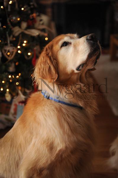 12-29-17 Tom and Marlyn Edward's dog - Max-1.jpg