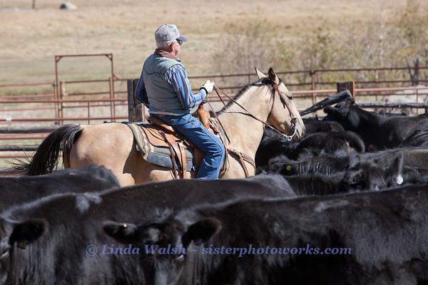 Meining Cattle Co