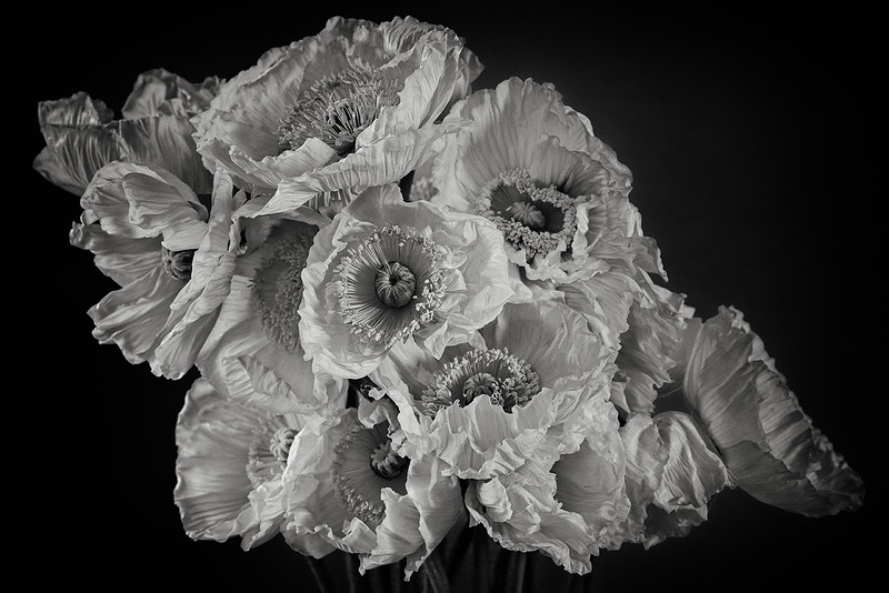 poppy-02.jpg