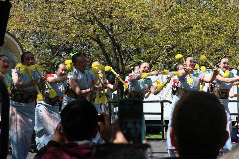 Sakura-0076.jpg