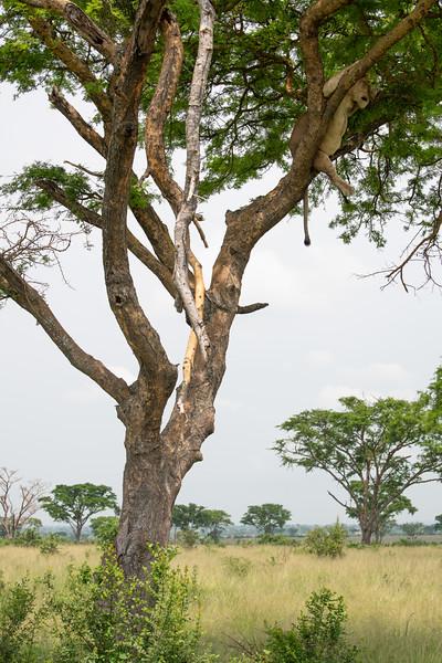 Uganda_T_QE-2081.jpg