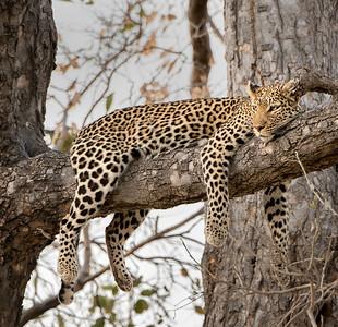 Ultimate Africa - Okavango Delta, Botswanna - Aug. 2014