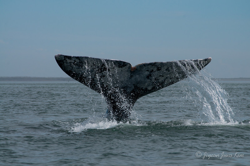 Mexico-Loreto-Whale-2413.jpg