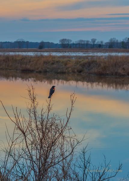 Blackwater Nature Preserve