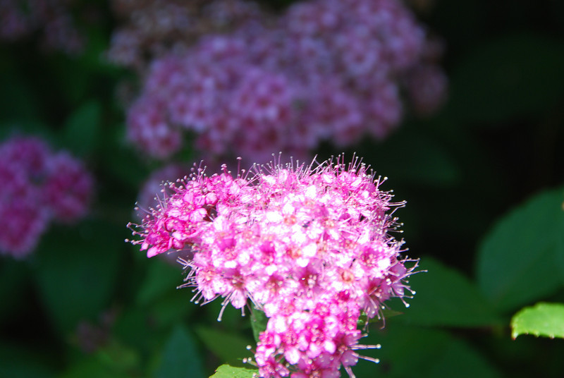 Flowers - 24