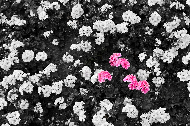Dash of Pink