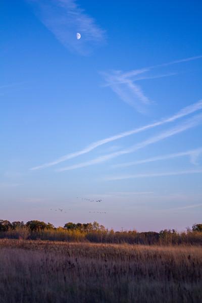 Sandhill Crane flock flying flight Sherburne National Wildlife Refuge Sherburne County MNIMG_1757.jpg