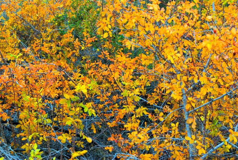 Fall Color 01 Leaves.jpg