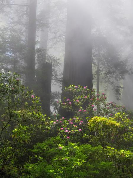 Redwoods NP (2020-05-28)