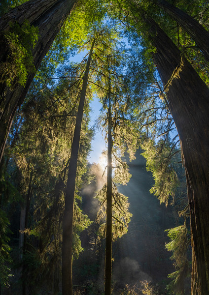 19-12-31 redwoods 0012-512-HDR-Pano.jpg