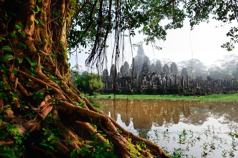 Nature's Ruins  |  Angkor Wat, Cambodia