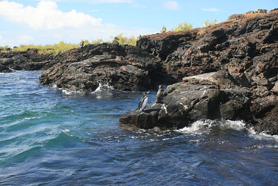 Galapagos 2011 #2