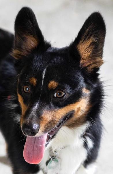 Kili Dog
