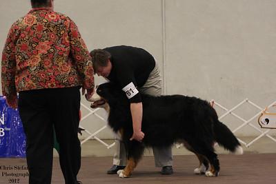 Veteran Dog 7-9 yrs