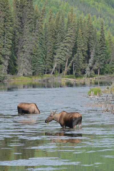 Alaska Fall 2013 - 26.jpg