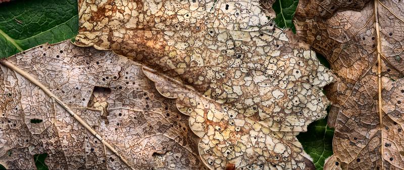 Fungal Patterns