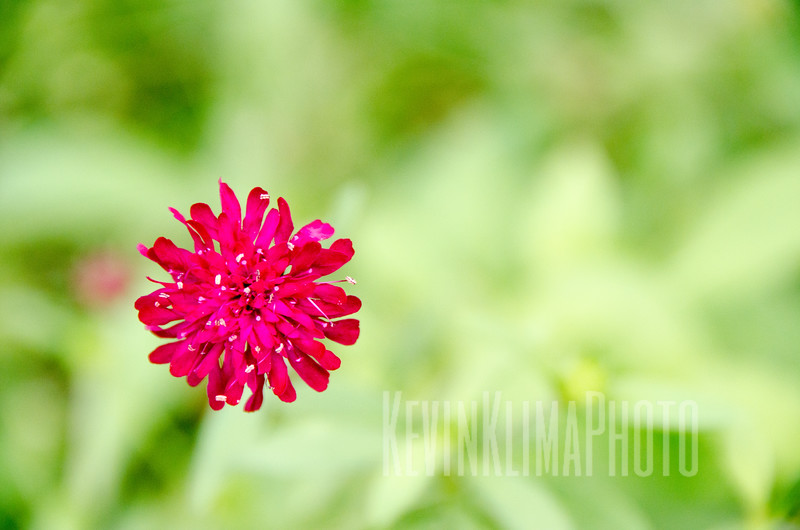 Botanic6.jpg