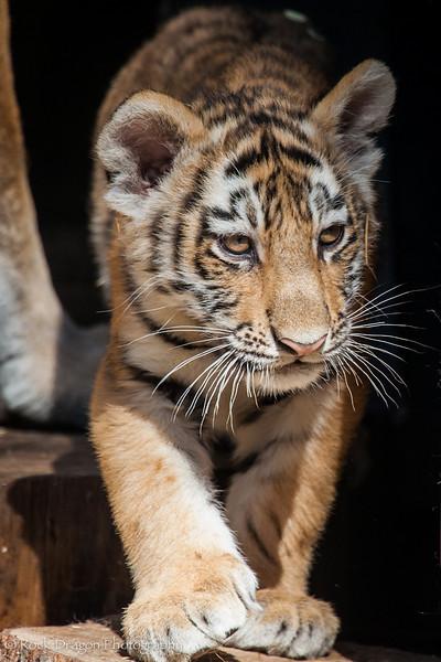 zoo_july_2012-25.jpg