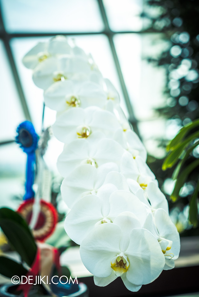 Gardens by the Bay - Orchid Extravaganza 2016 - pure white