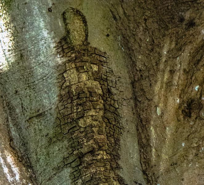 Banyan Tree  Elvis