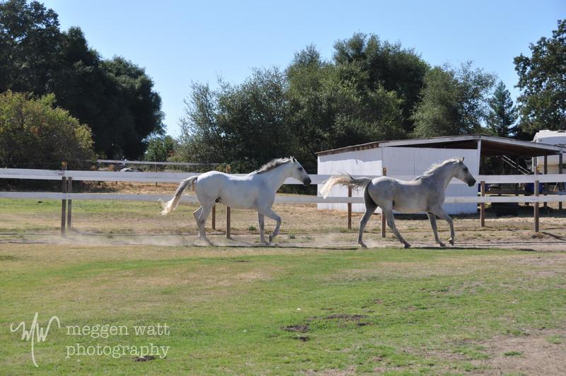 EB&Horses-123.jpg