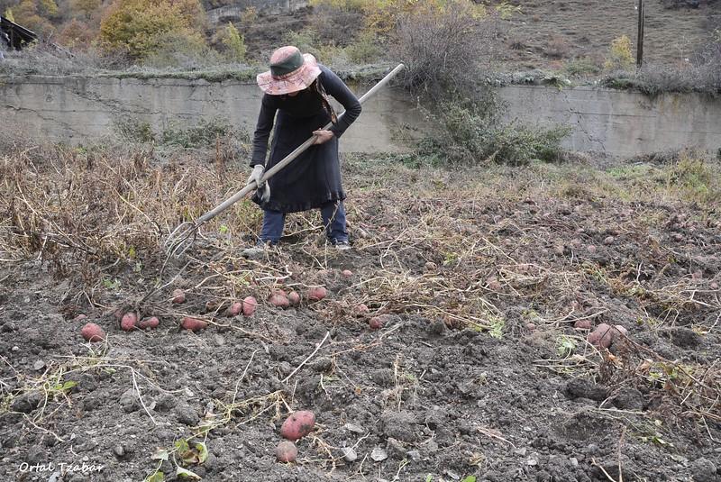 אשה בשדה.jpg