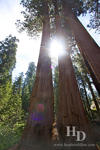 2012-05 Sequoia National Park