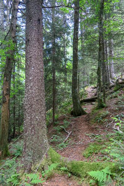 Green Mountain Trail -- 5,300'