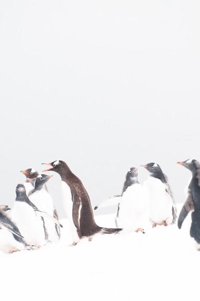 Antarctica 2015 (67 of 99).jpg
