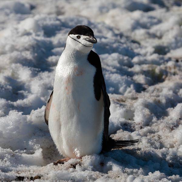 _MG_4502_20170119_Antarctica.jpg